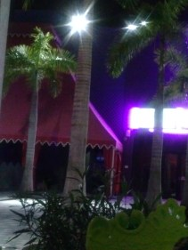 Palm trees in the Miami Night life