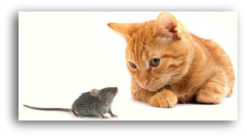 MCat and Mouse in Cincinnati Real Estate