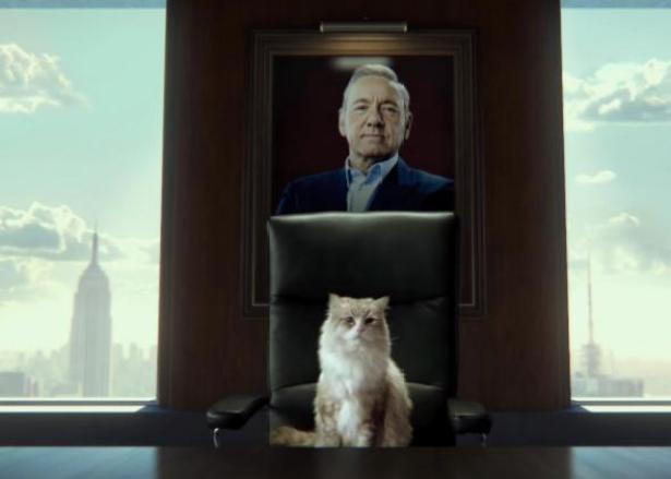 nine lives cat at desk