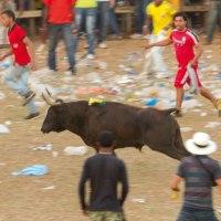Running with bulls Turbaco style