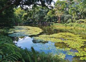 The botanical gardens of Medellin are a peaceful oasis.