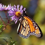 The Tamer of Sad Butterflies/ Federico Garcia Lorca