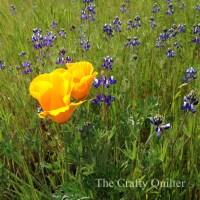 Spring Petals QAL coming soon