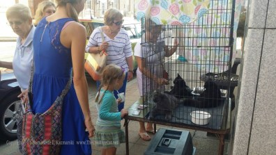 People came to see the kittens as soon as the cage was set up!