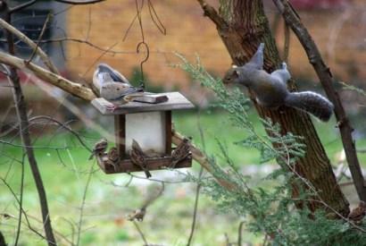birds-BackFeeder