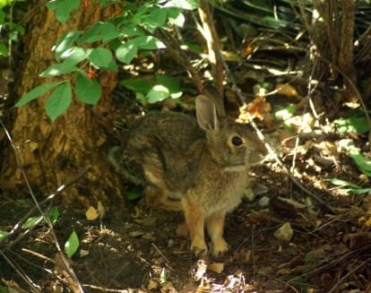 rabbit in shadows