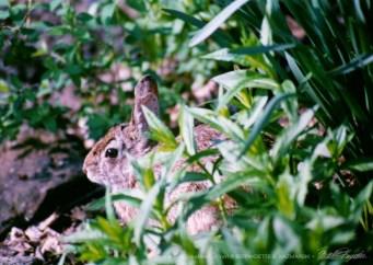 Bunny in the spring yard.