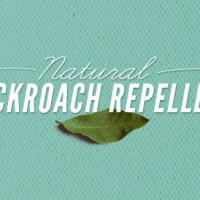 Natural Cockroach Repellent