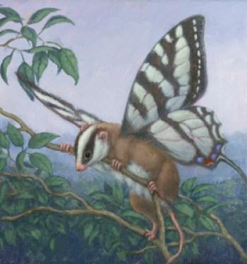Feathertail possum