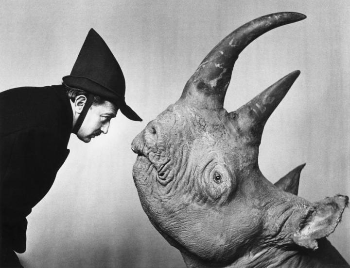 salvador-dali-rhino
