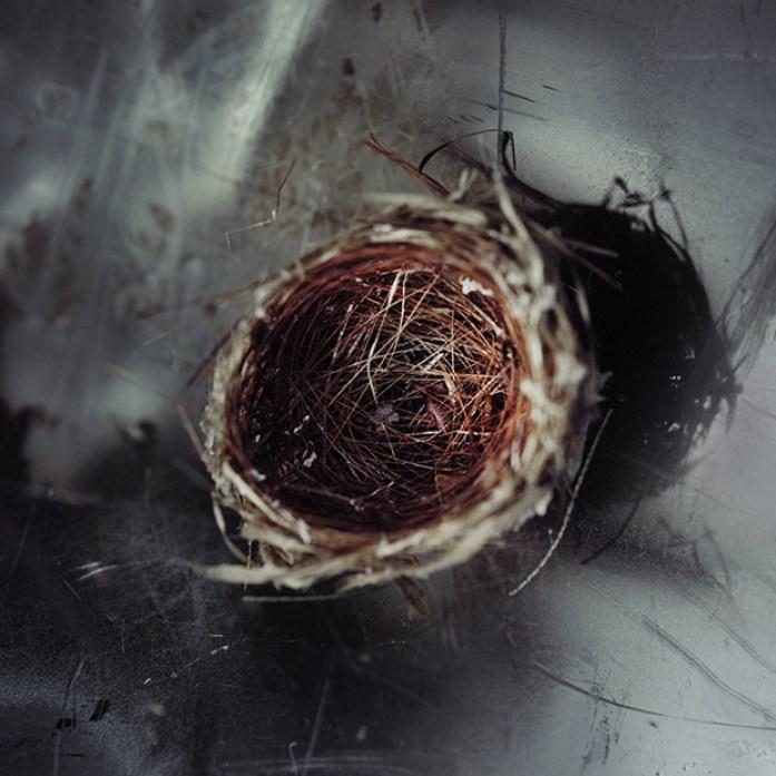 17_nest