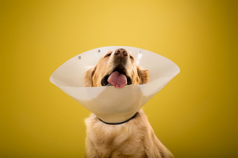 ty-foster-time-out-dogs-wearing-cones-designboom-02