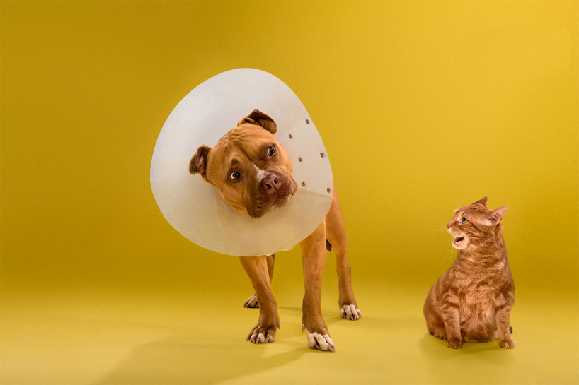 ty-foster-time-out-dogs-wearing-cones-designboom-04