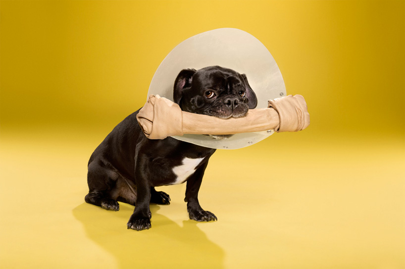 ty-foster-time-out-dogs-wearing-cones-designboom-08
