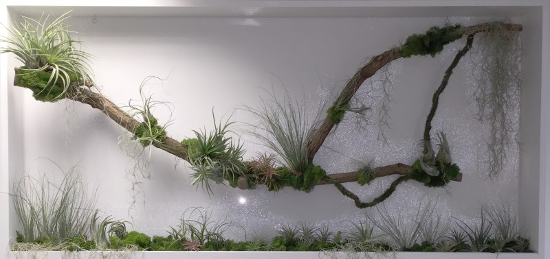 OST_phase2-reception-living-wall-plant-frames-office-london-curious-gardener-all-crop