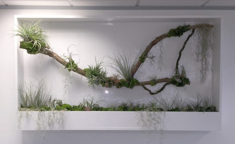 Ost Reception Living Wall Plant Frames Office London