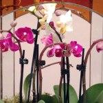 terrariums-london-greenwall-plant-home-houseplants-curious-gardener-close-888