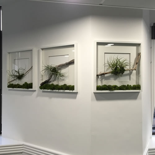 terrariums-london-greenwall-plant-office-houseplants-curious-gardener-close-6