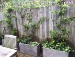 Garden in Islington #1