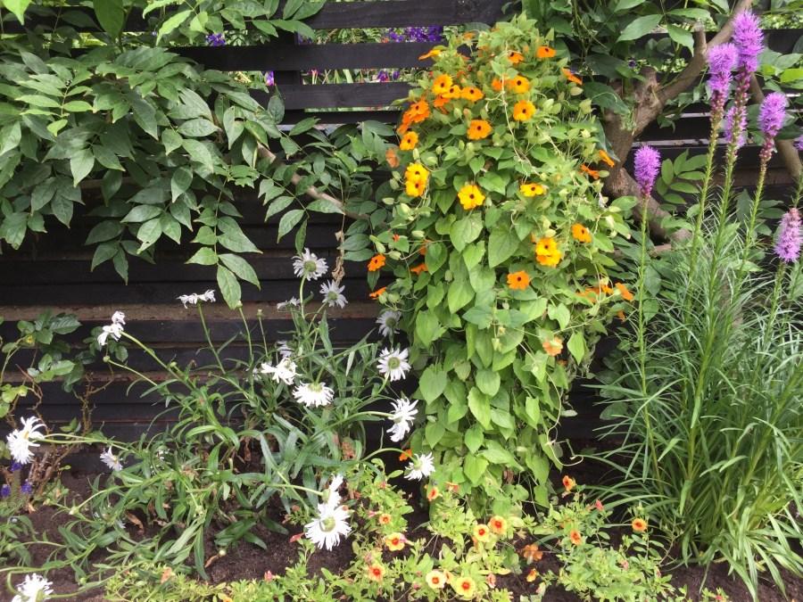 garden design crouch end london (7)