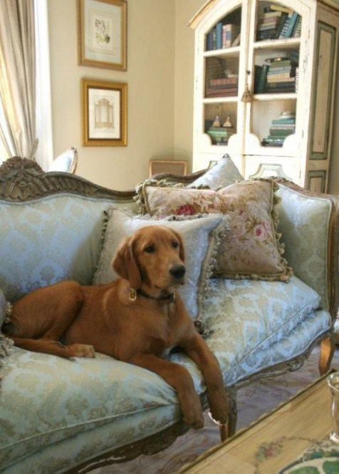 Annies Dog on her Beautiful Sofa Euro Trash Girl   Annie Brahler