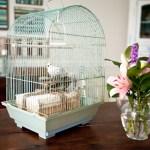 turquoise birdcage