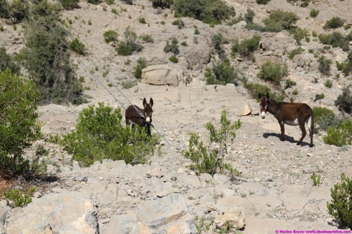 donkeys everywhere!