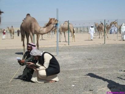 camel festival filomena03