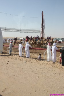 camel festival neil2