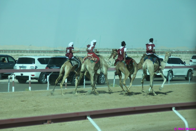 camel festival neil4