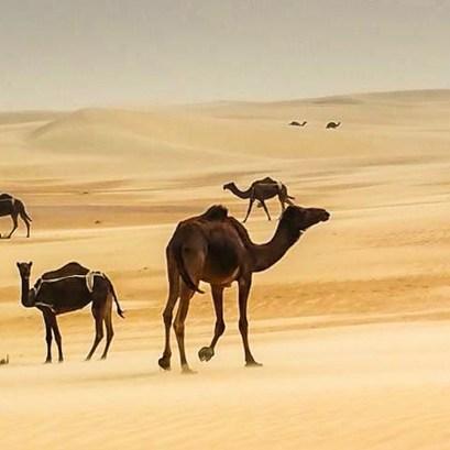 desert life4