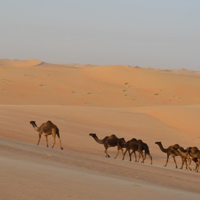 desert life5