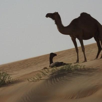 desert life7