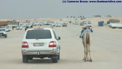 Taking his camel for a walk
