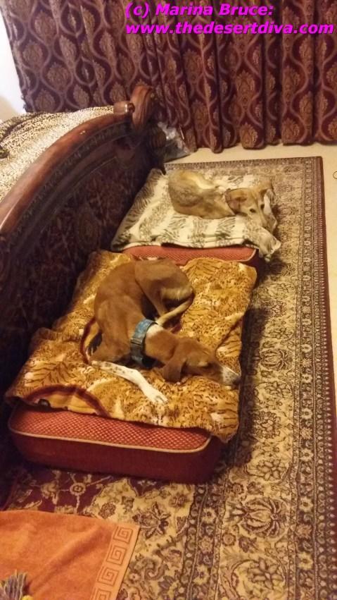 royal sleeping accommodation
