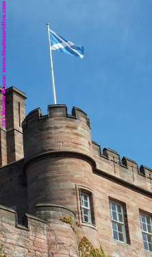 Saltire flying proudly at Dalhousie