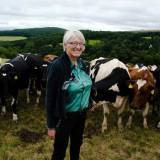 Mary Quicke and her dairy herd
