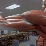Random image: Strained-triceps-treatment-Skip-Schumaker-photo2