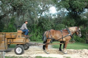 fortwilderness wagon rides