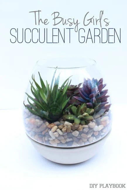 The Busy Girl's Succulent Garden