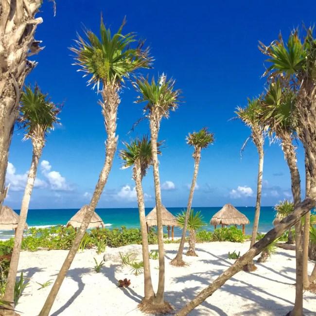 Palm-Trees-Honeymoon
