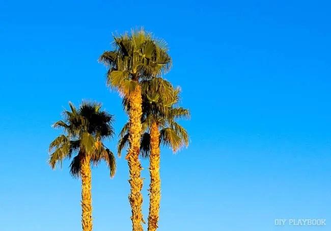 arizona-palm-trees