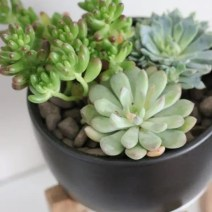 succulent_target_stand_plant-5