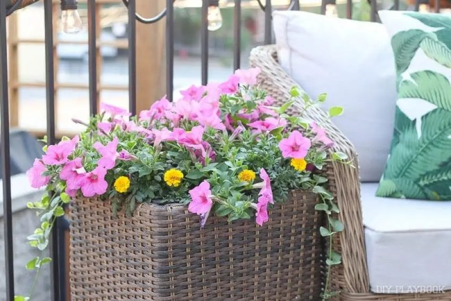 flowers-patio