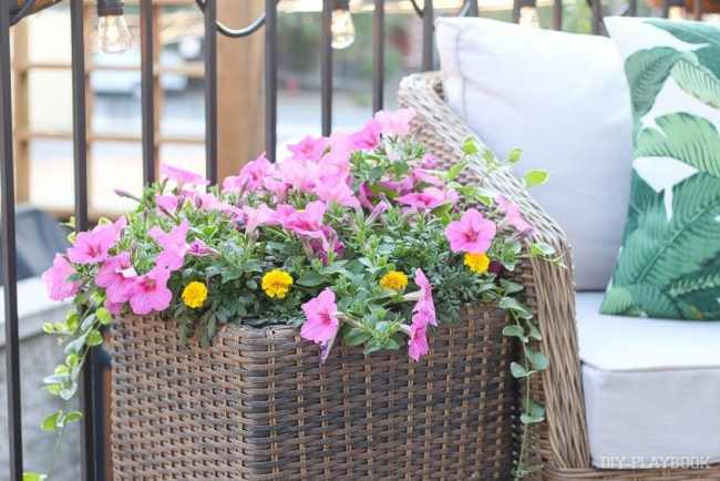 flowers-patio