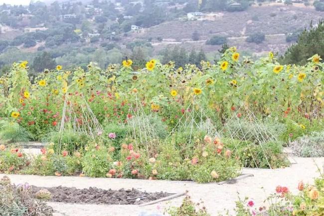 garden-carmel-michaels-makers