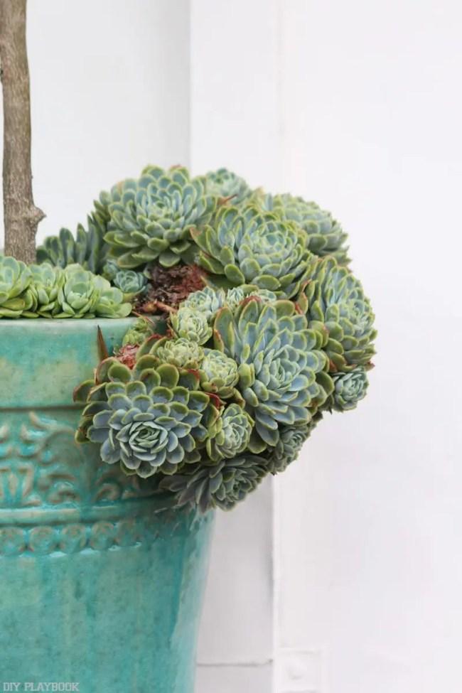succulents-plant-blue-vase