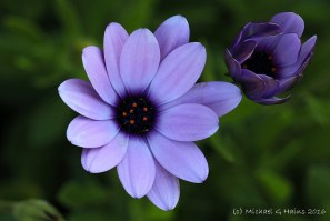 flower4-copy