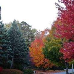 Autumn in Suburbia, Sundays in My City. 2015 Retrospective, The Doglady's Den