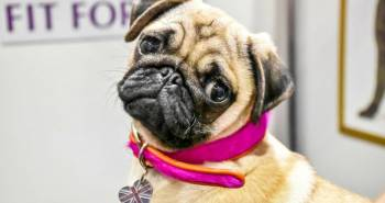 fb-discover-dogs-2016-1